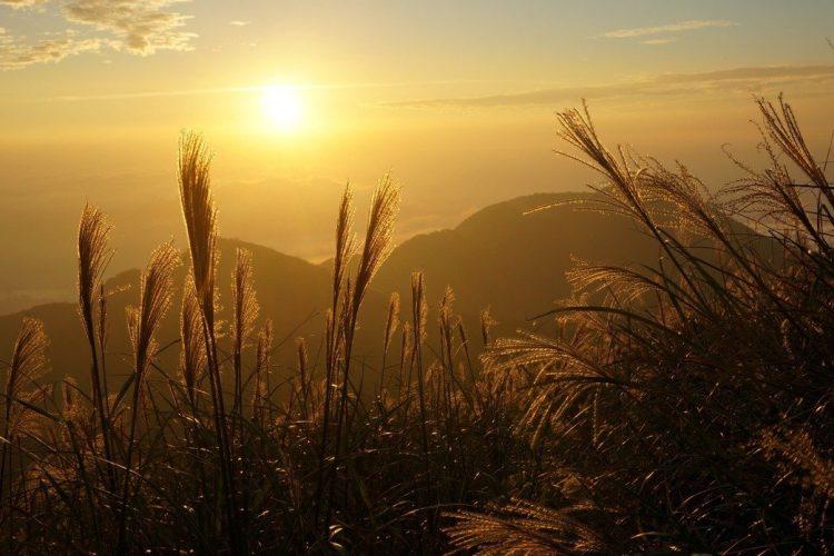情境照,與新聞無關。圖為曾被譽為台灣八景之一的「大屯夕照映秋芒」,秋天可見美麗的夕陽、金黃的芒花、翻騰的雲海,常吸引很多喜愛大自然的朋友駐足。記者曾吉松∕攝影